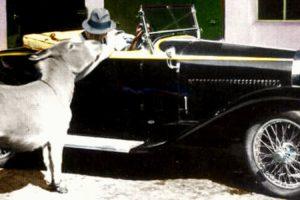 Snapshot: Cinco vitórias e um burro